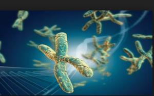 anormalidades cromossômicas  300x188 - As Causas do aborto Espontâneo: O que você pode fazer para evitá-los